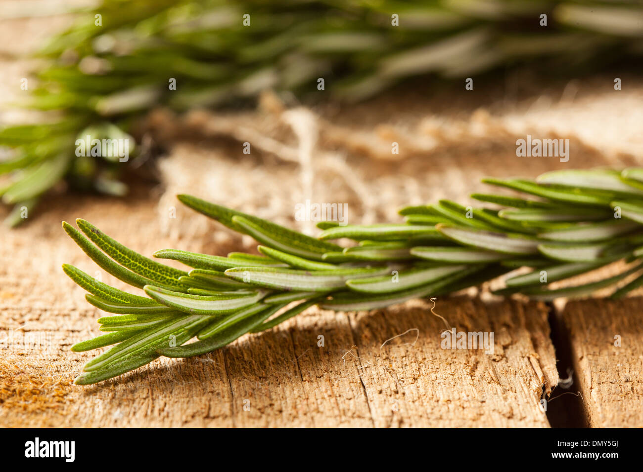 Fresh Organic Green Rosemary Sprig on a Background - Stock Image