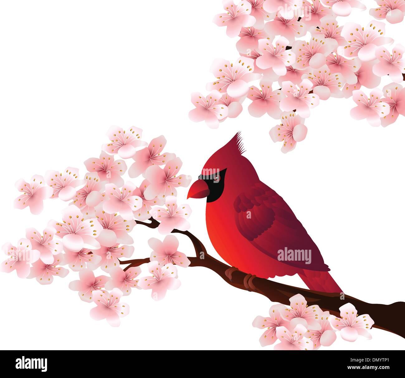 red bird sitting on cherry tree blossom - Stock Vector