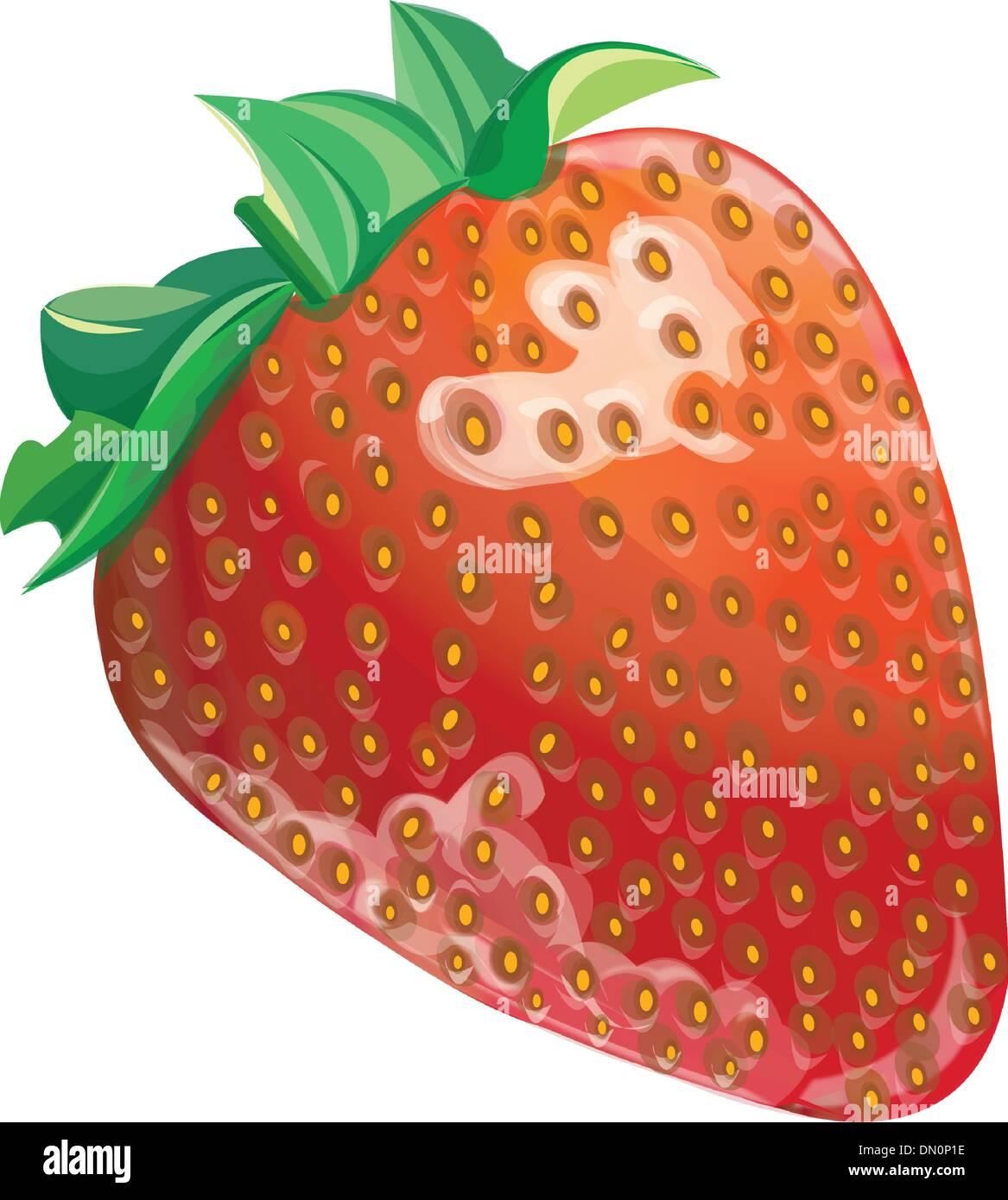 strawberry illustration - Stock Vector