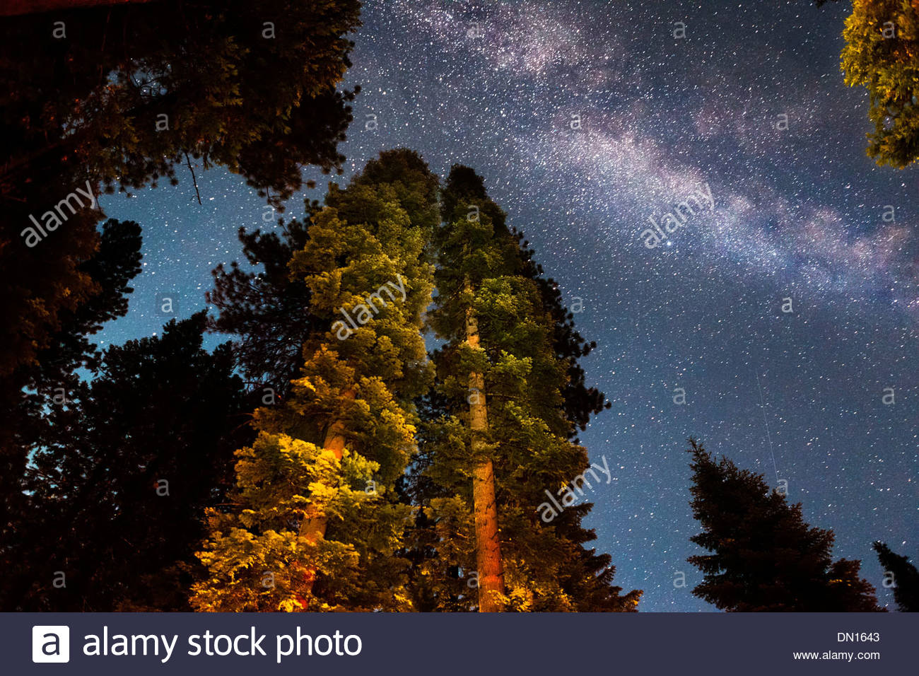Milky Way Galaxy, Calaveras Big Trees State Park, California - Stock Image