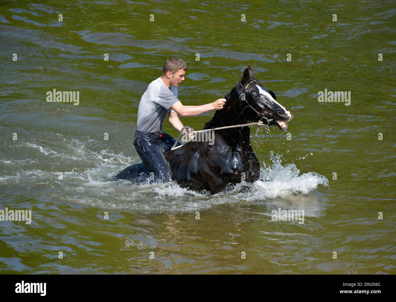 Gypsy traveller riding horse in River Eden. Appleby Horse Fair, Appleby-in-Westmorland, Cumbria, England, United Kingdom, Europe - Stock Image