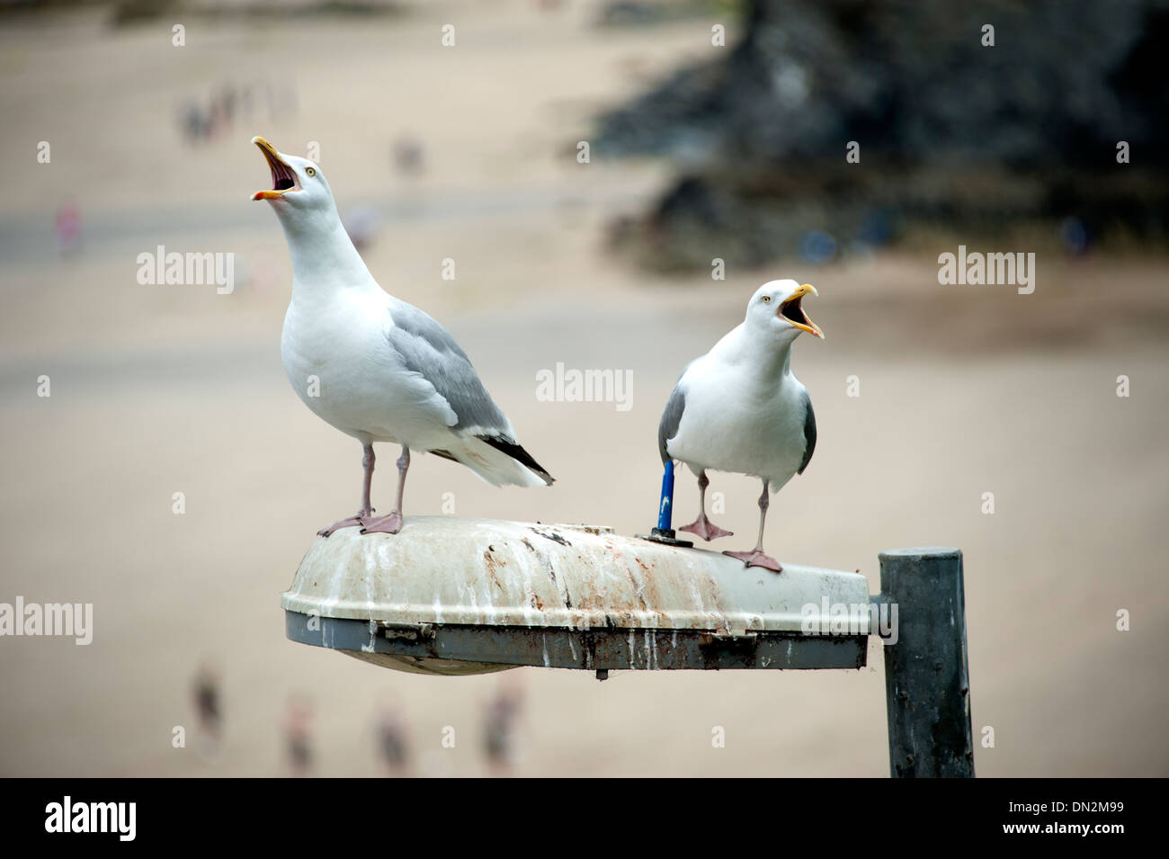 Seagulls on street lamp poo mess dirty soiled bird - Stock Image