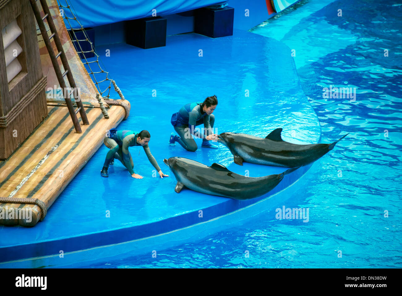 Dolphins performing with humans, Ocean Park, Hong Kong - Stock Image