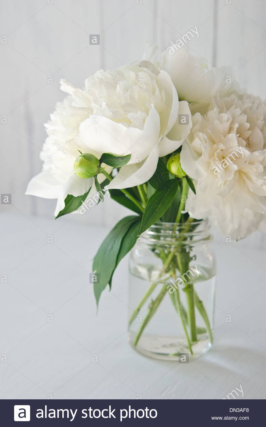 White peony flowers with green leaves and buds in glass jar on white white peony flowers with green leaves and buds in glass jar on white stock photo 64613004 alamy mightylinksfo Image collections
