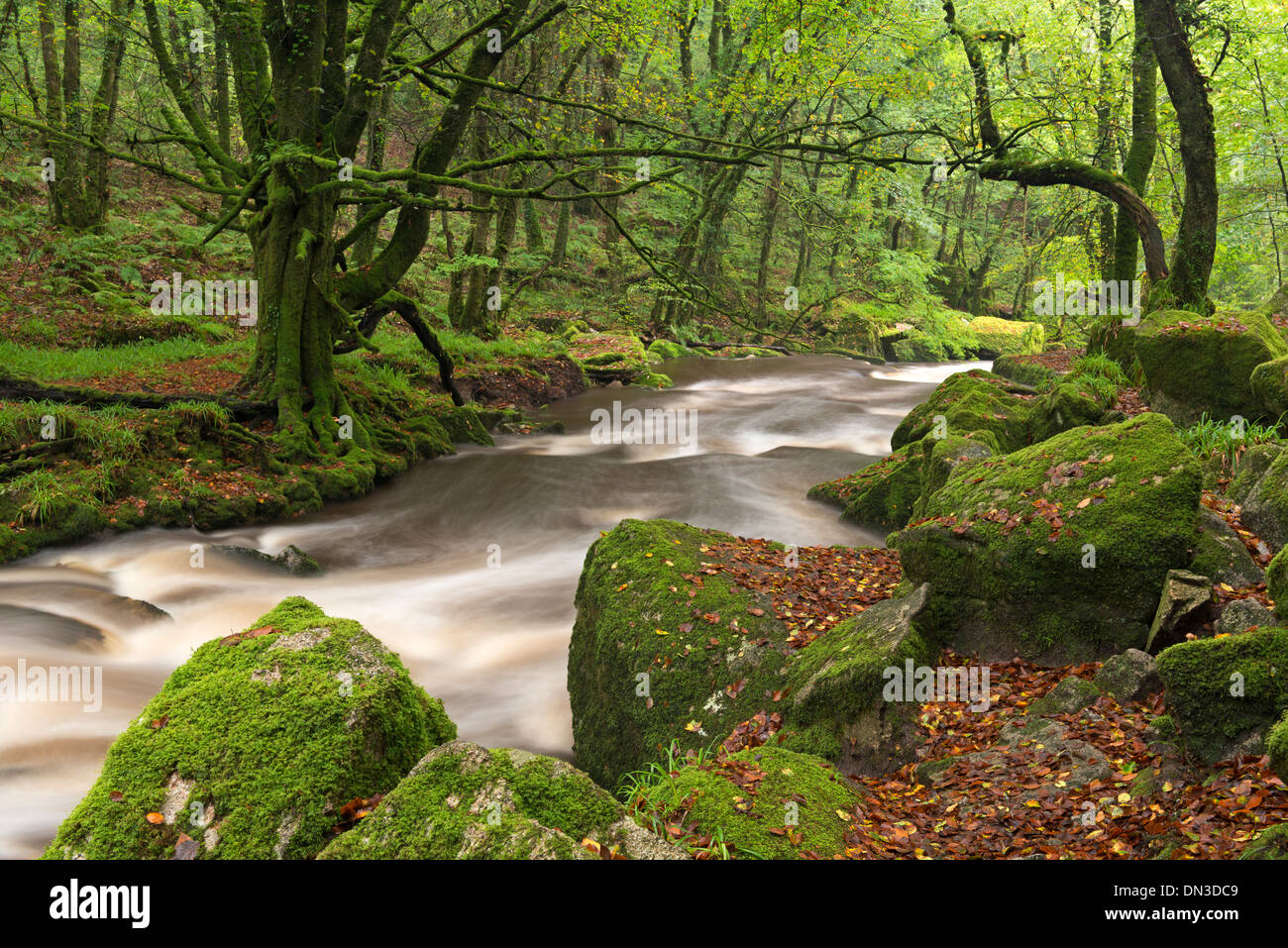 The River Fowey flowing though Draynes Wood at Golitha Falls National Nature Reserve, Cornwall, England. Autumn (October) 2013. - Stock Image