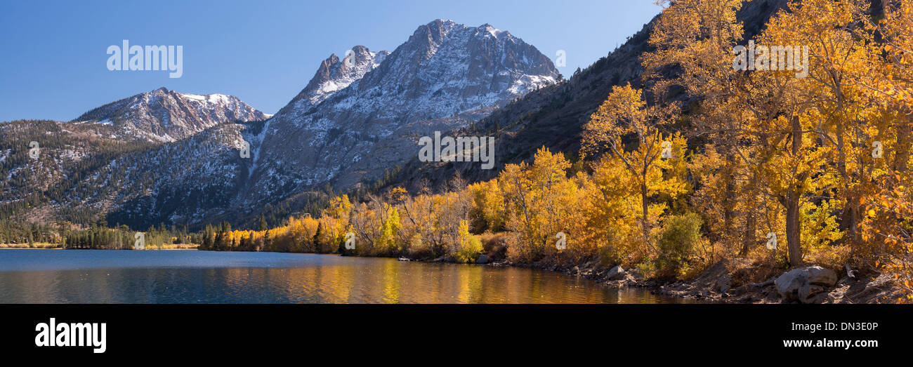 Golden foliage on the shores of Silver Lake in the Eastern Sierra Mountains, California, USA. Autumn (October) 2013. - Stock Image