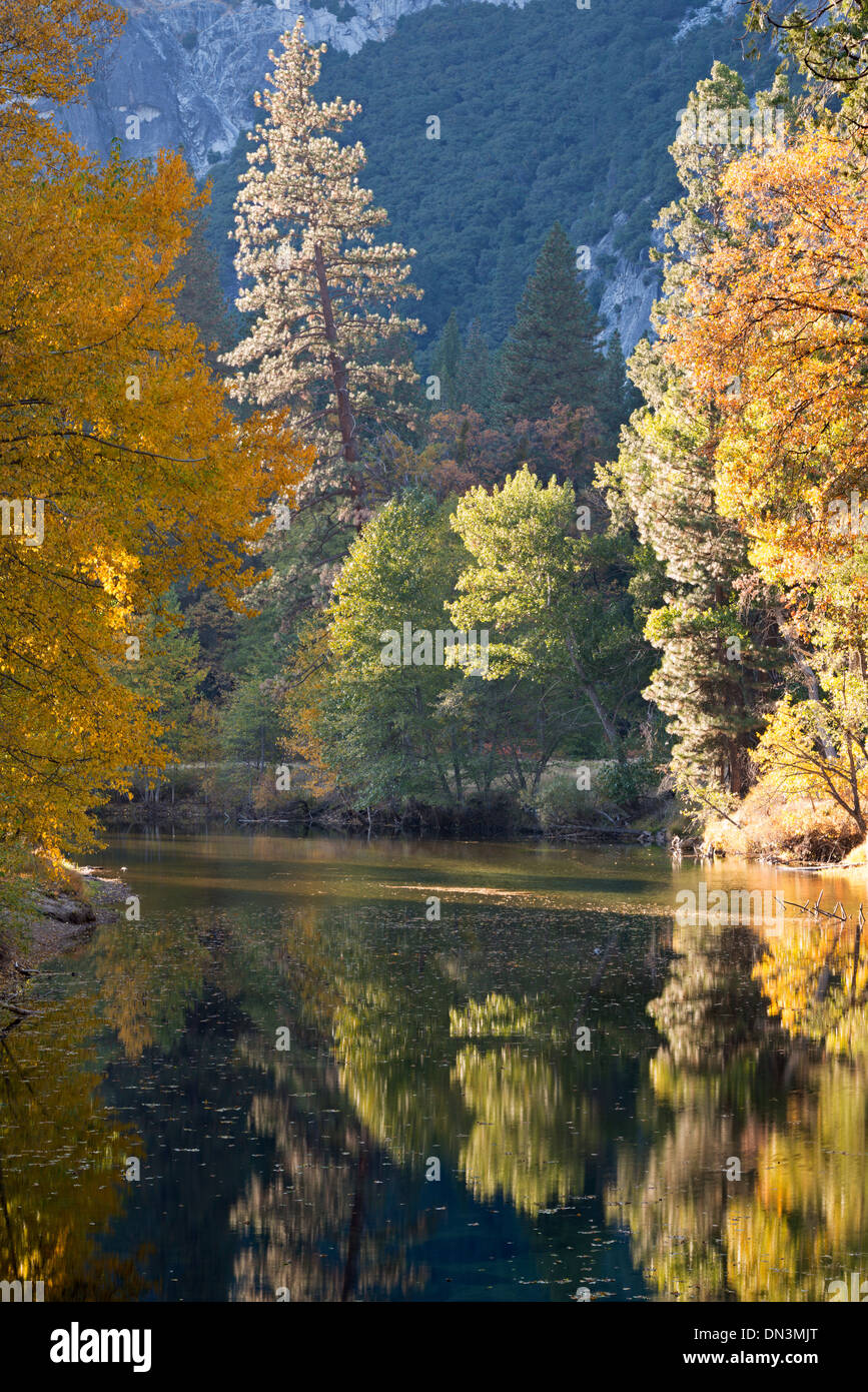 Autumn foliage reflected in the Merced River, Yosemite Valley, California, USA. Autumn (October) 2013. - Stock Image