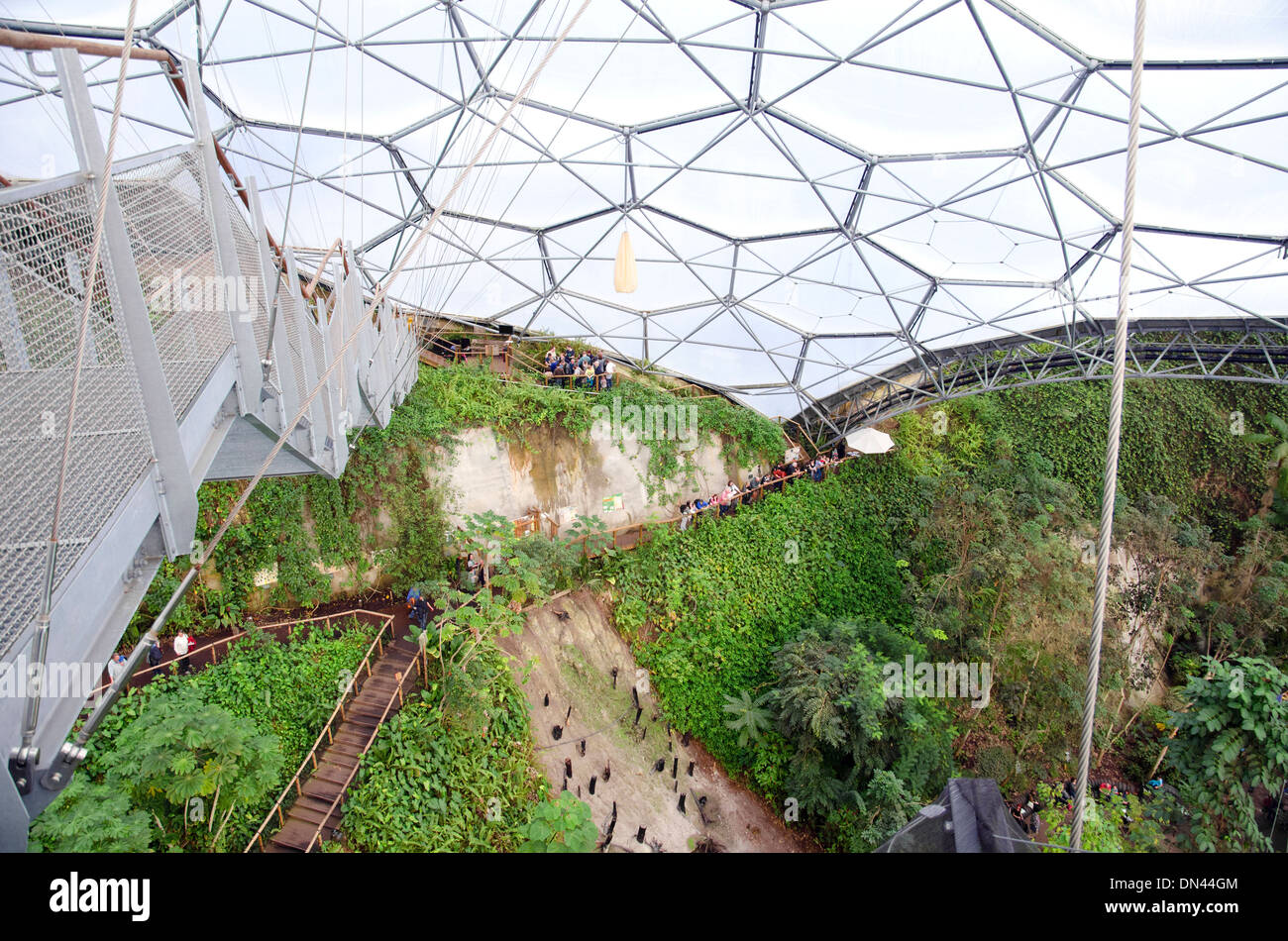 A birds eye view from the high-level viewing platform inside the Tropical Biome at the Eden Project in Cornwall, UK - Stock Image