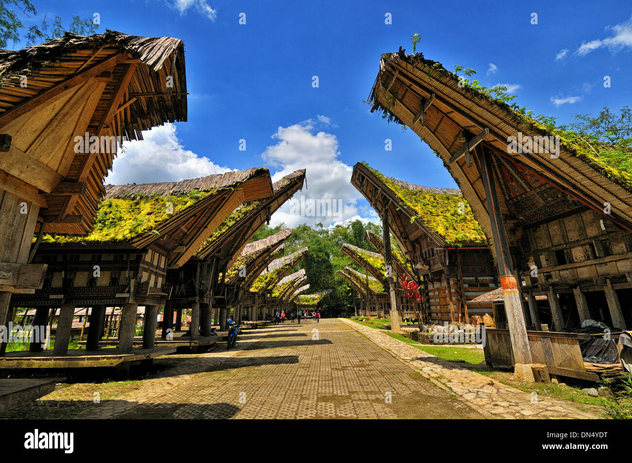 Rows of Tongkonan houses, Londa, South Sulawesi - Stock Image