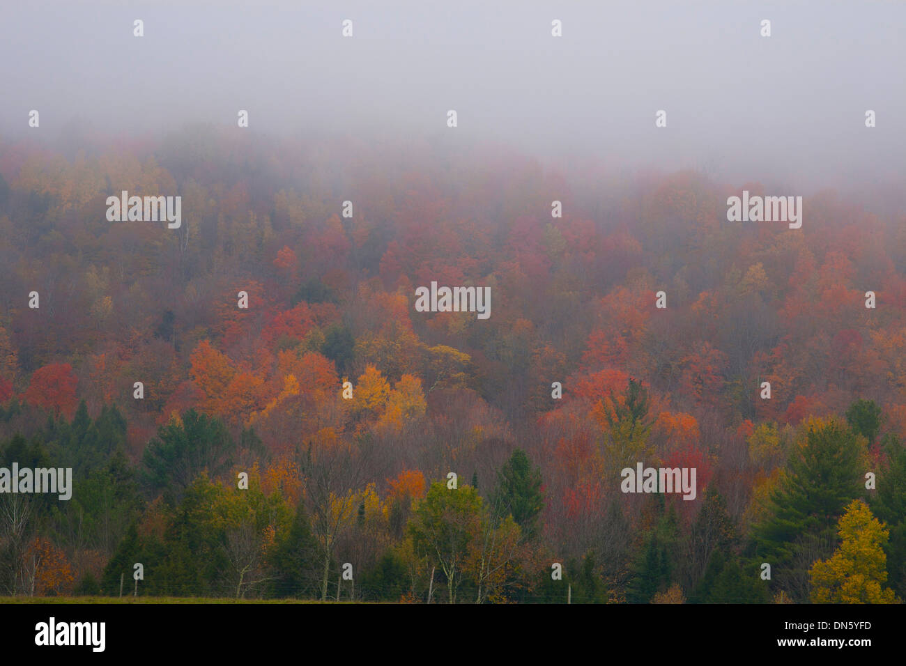 Foggy forest on an early morning in autumn, Eastern Townships, Quebec, Canada - Stock Image