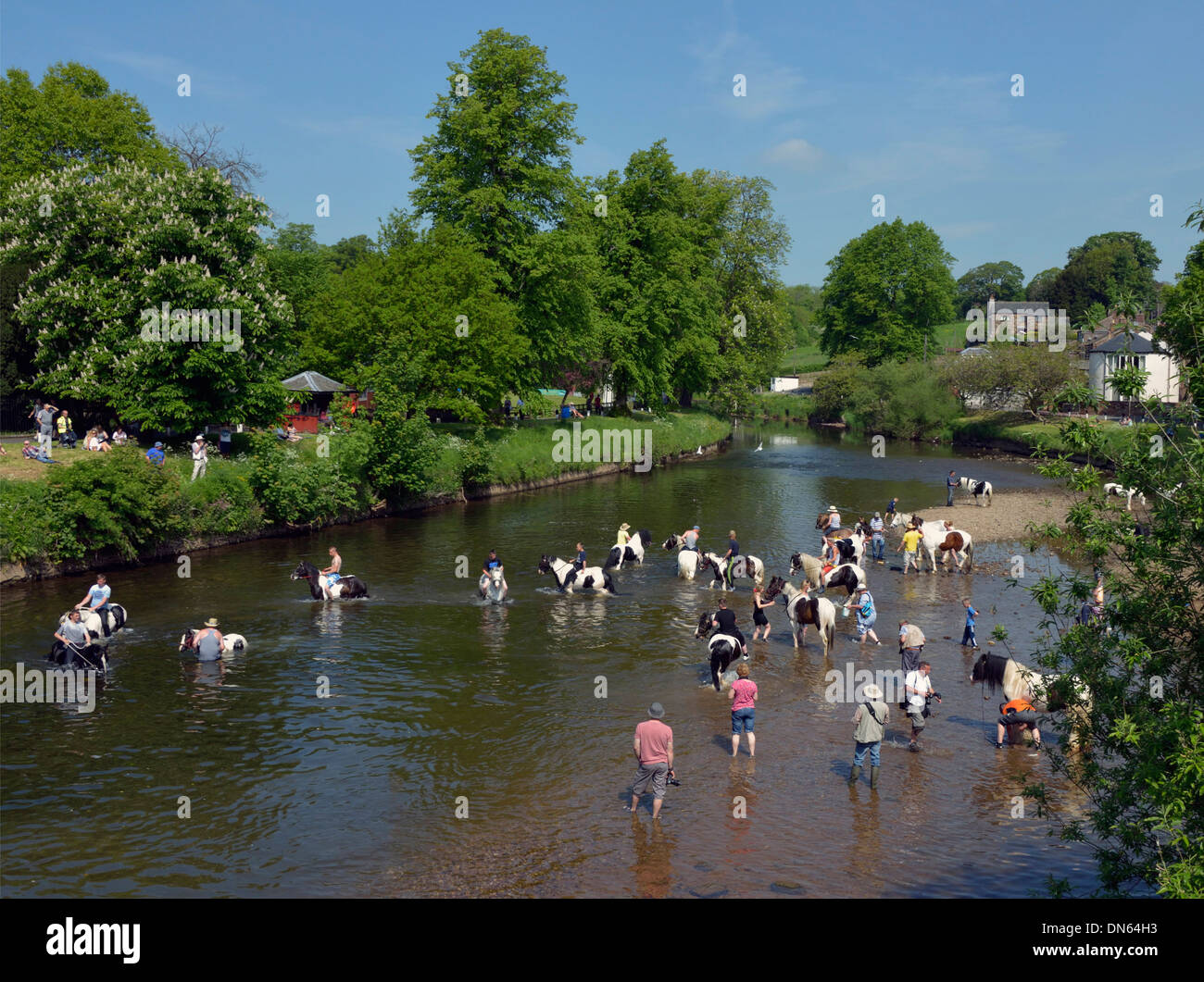 Gypsy travellers with horses in River Eden. Appleby Horse Fair, Appleby-in-Westmorland, Cumbria, England, United Kingdom, Europe - Stock Image