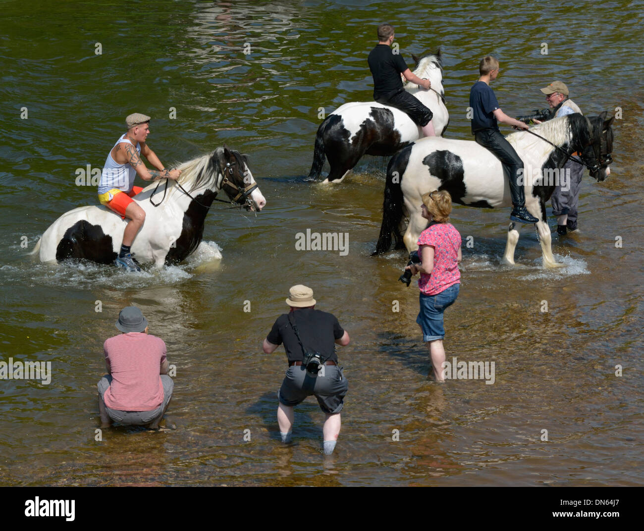 Gypsy travellers with horses and photographers in River Eden. Appleby Horse Fair. Appleby-in-Westmorland, Cumbria, England, U.K. - Stock Image