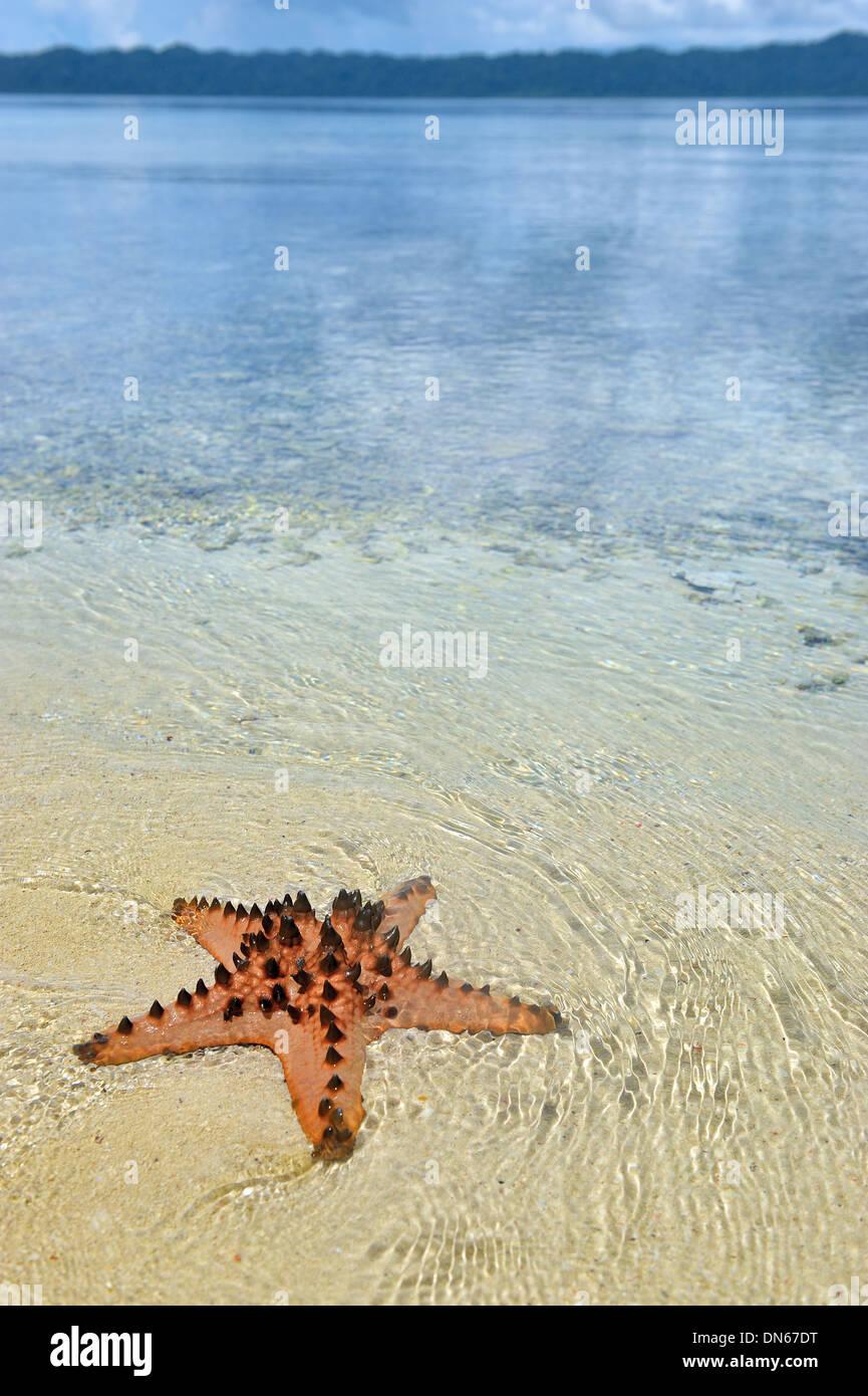 The star of the Sea, Sawinggrai Raja Ampat - Stock Image