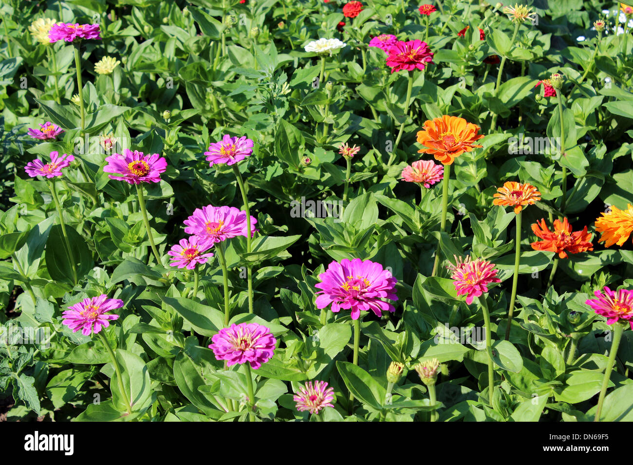 Many different beautiful flowers on the flower bed stock photo many different beautiful flowers on the flower bed izmirmasajfo