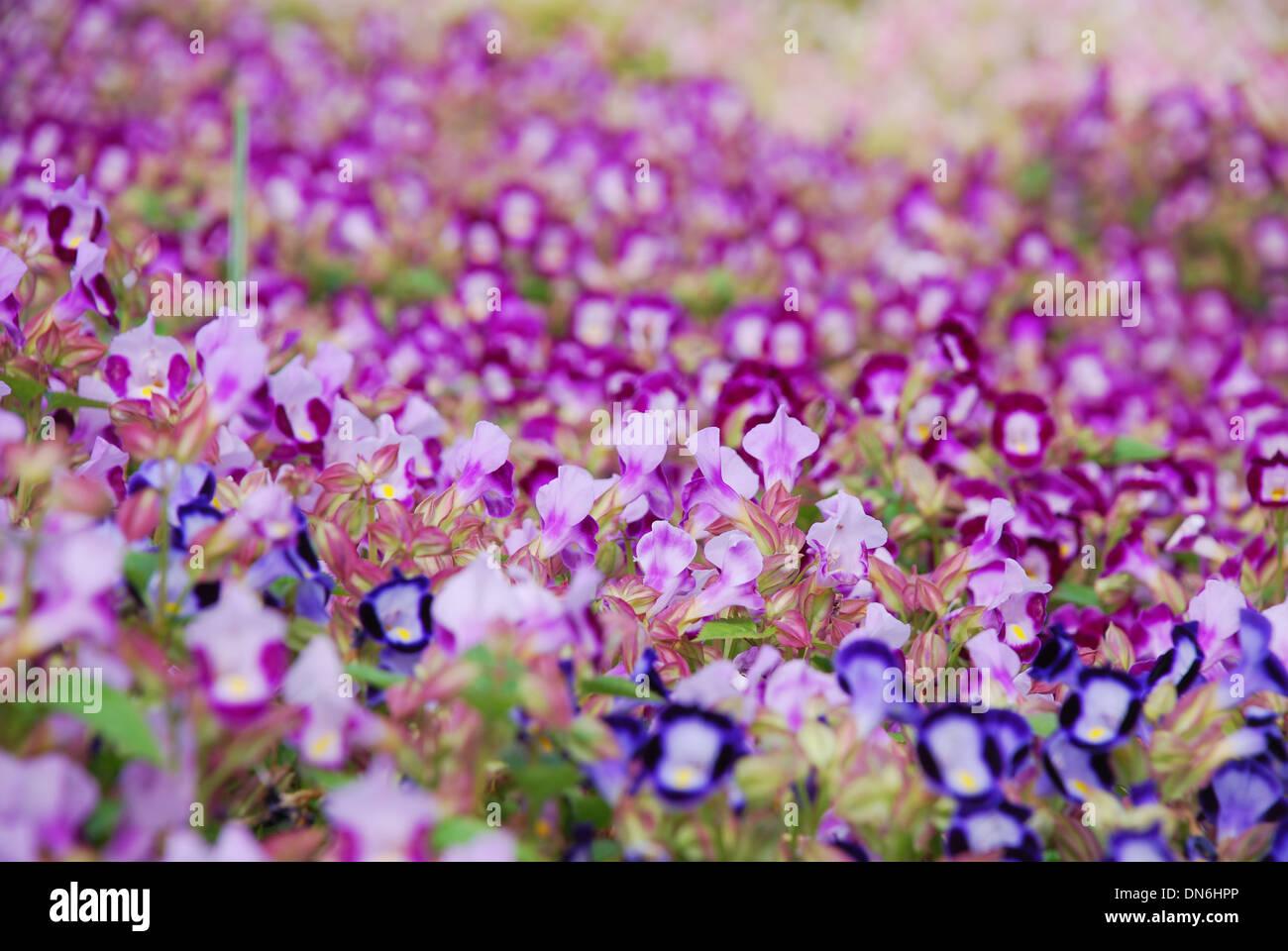 Small Purple Flowers Stock Photos Small Purple Flowers Stock