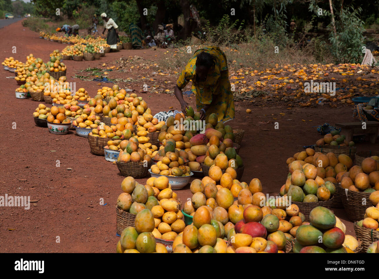 African Mango High Resolution Stock Photography And Images Alamy