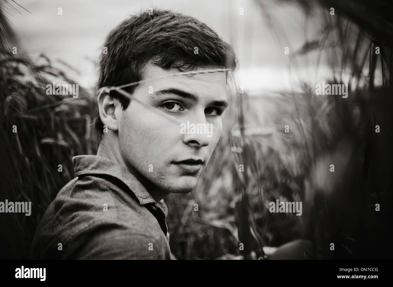 Young man standing in cornfield, portrait - Stock Image