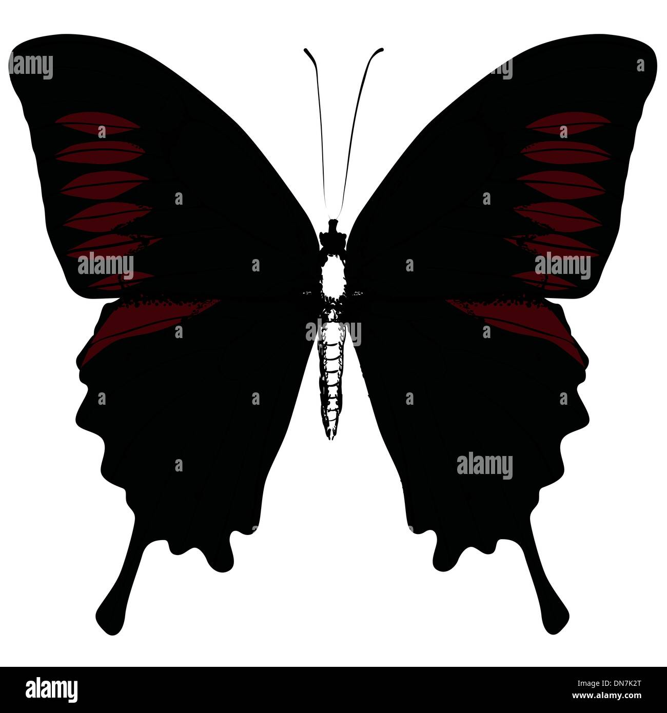 Isolated Butterfly Vector - Stock Image