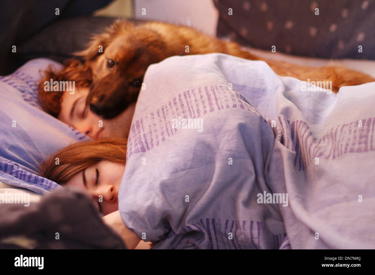Loving couple in bed with dog - Stock Image