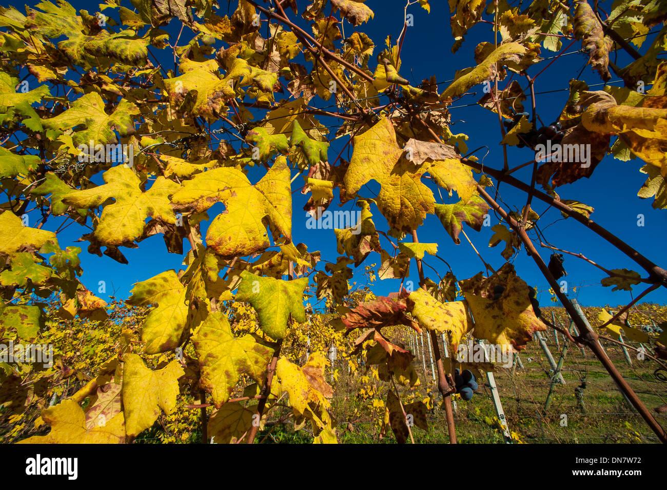 Europe Italy Piedmont langhe vineyards - Stock Image