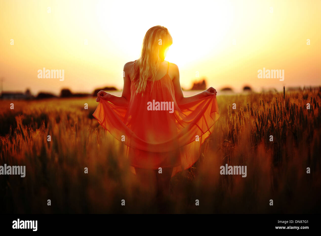 Woman with dress standing in the cornfield at sunset - Stock Image