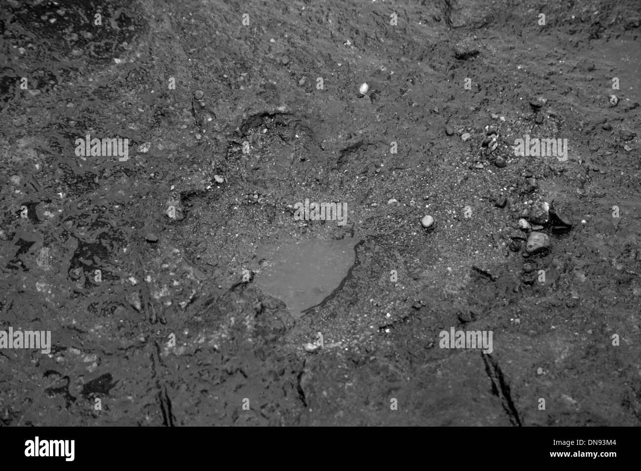 Dinosaur Footprint at Barry, South Wales - Stock Image