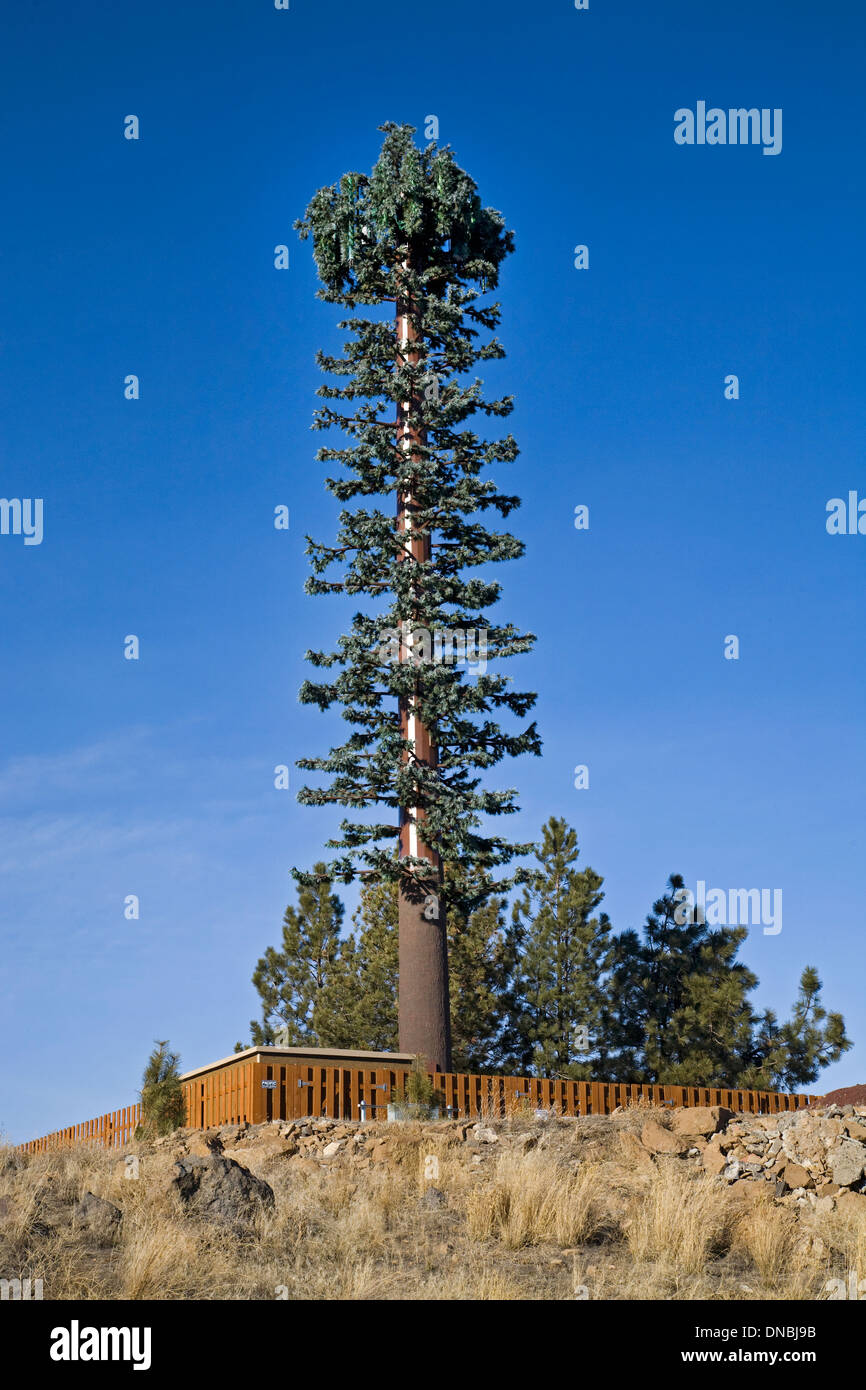 A cell phone tower in the shape of a ponderosa pine tree in 'Bend, Oregon - Stock Image