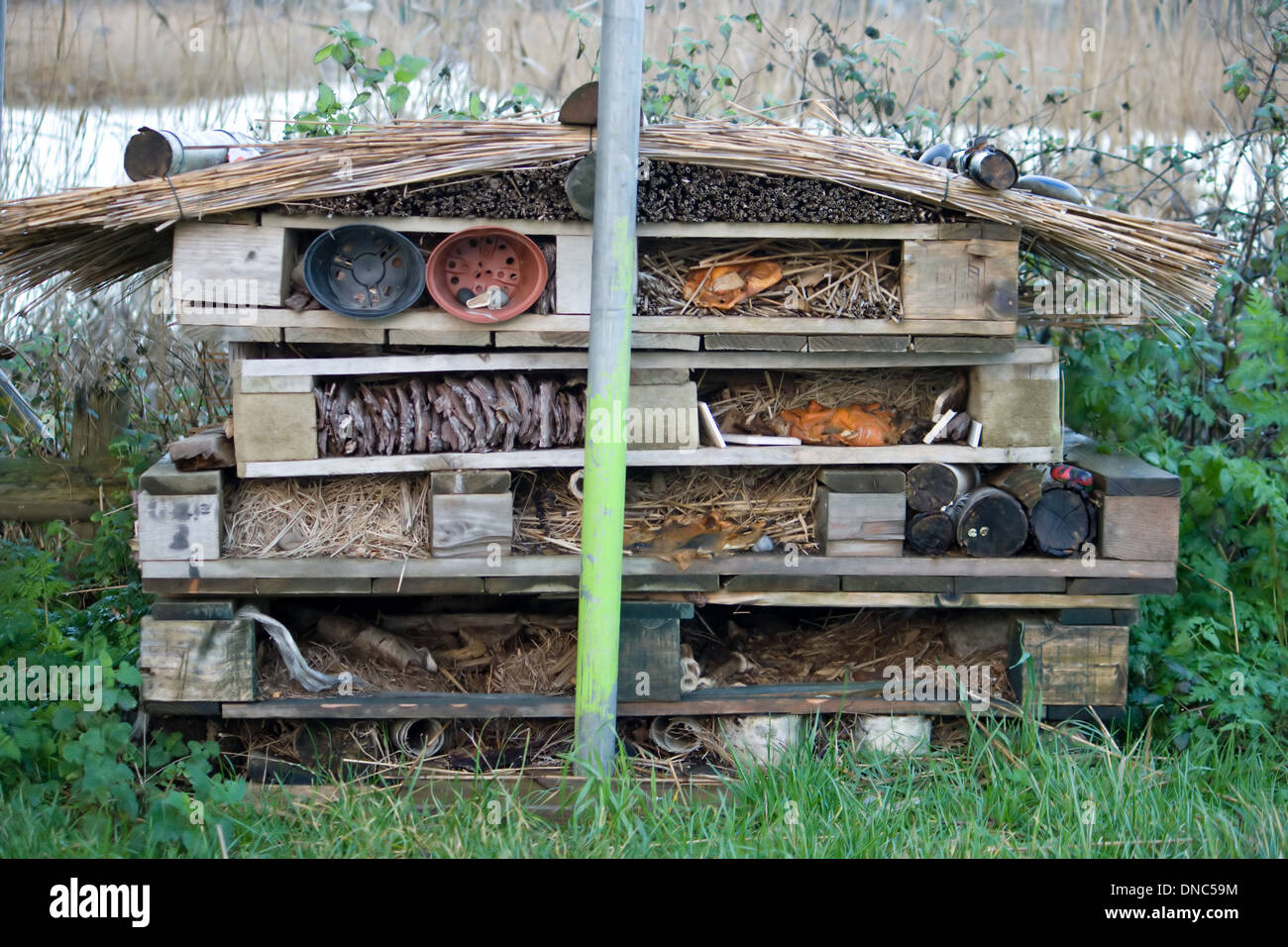 Home for insects and 'creepy crawlies' at Radipole lake nature reserve,Weymouth,Dorset. - Stock Image