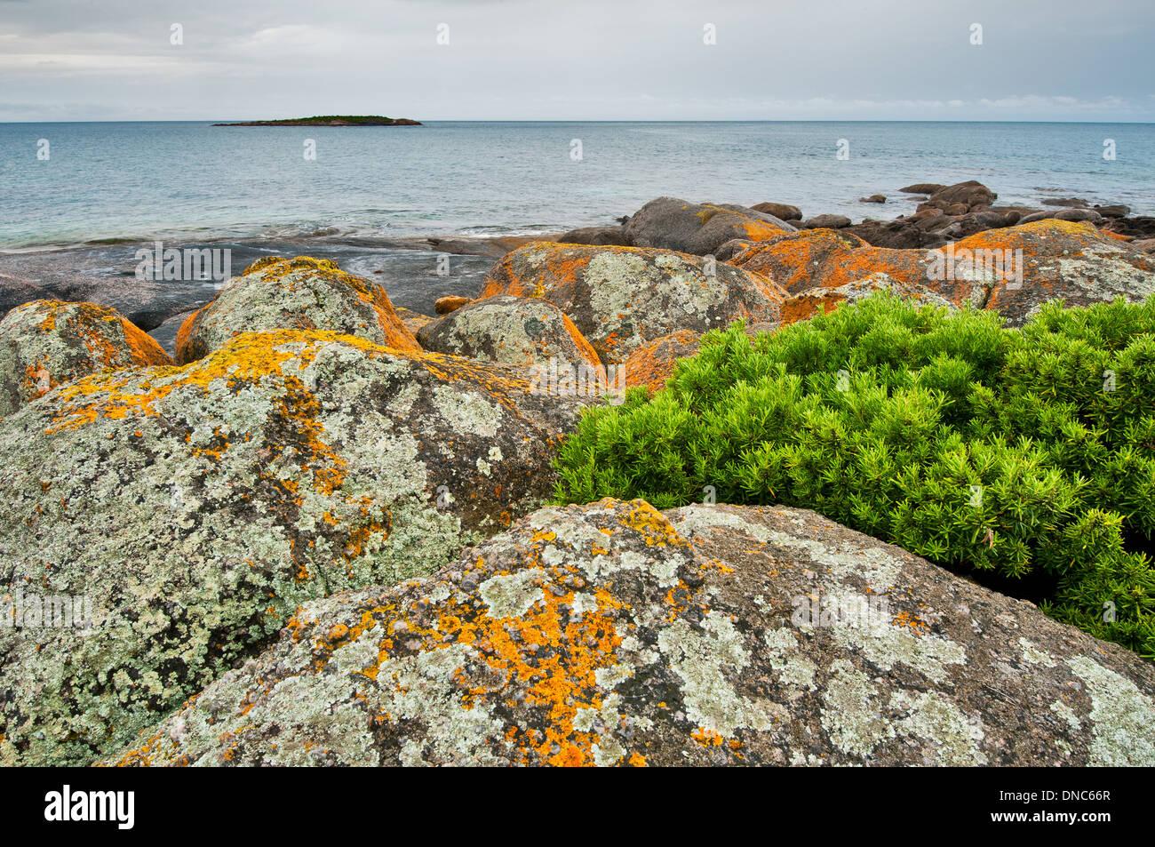 Lichen-covered rocks at Cape Donington. - Stock Image