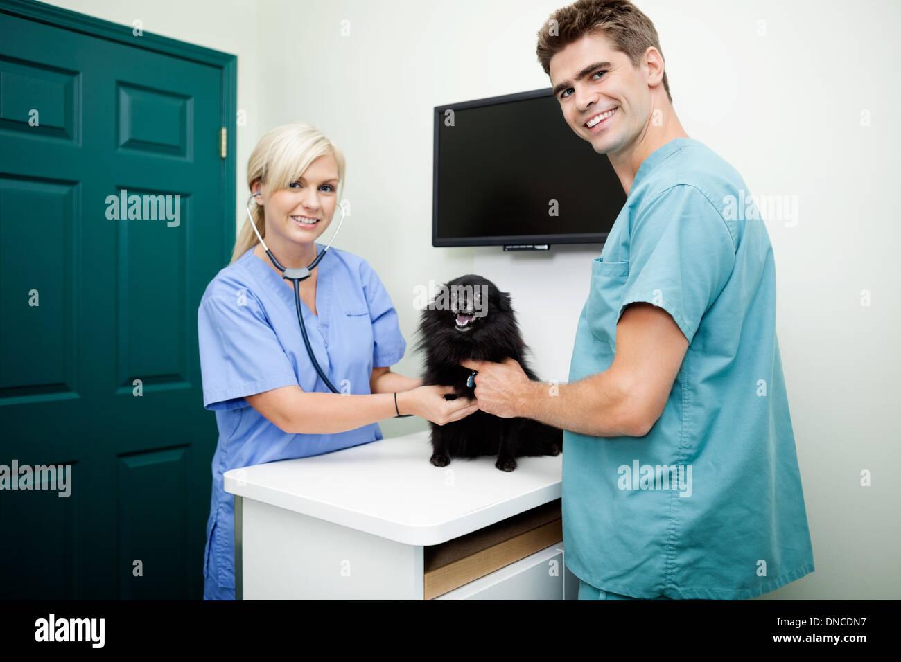 Young Veterinarian Doctors Examining A Dog - Stock Image