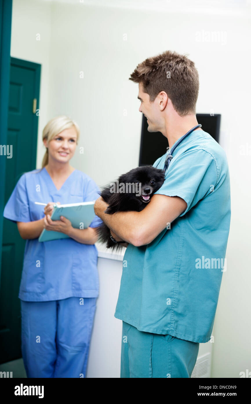 Veterinarian Doctor With A Dog Looking At Female Nurse Holding C - Stock Image