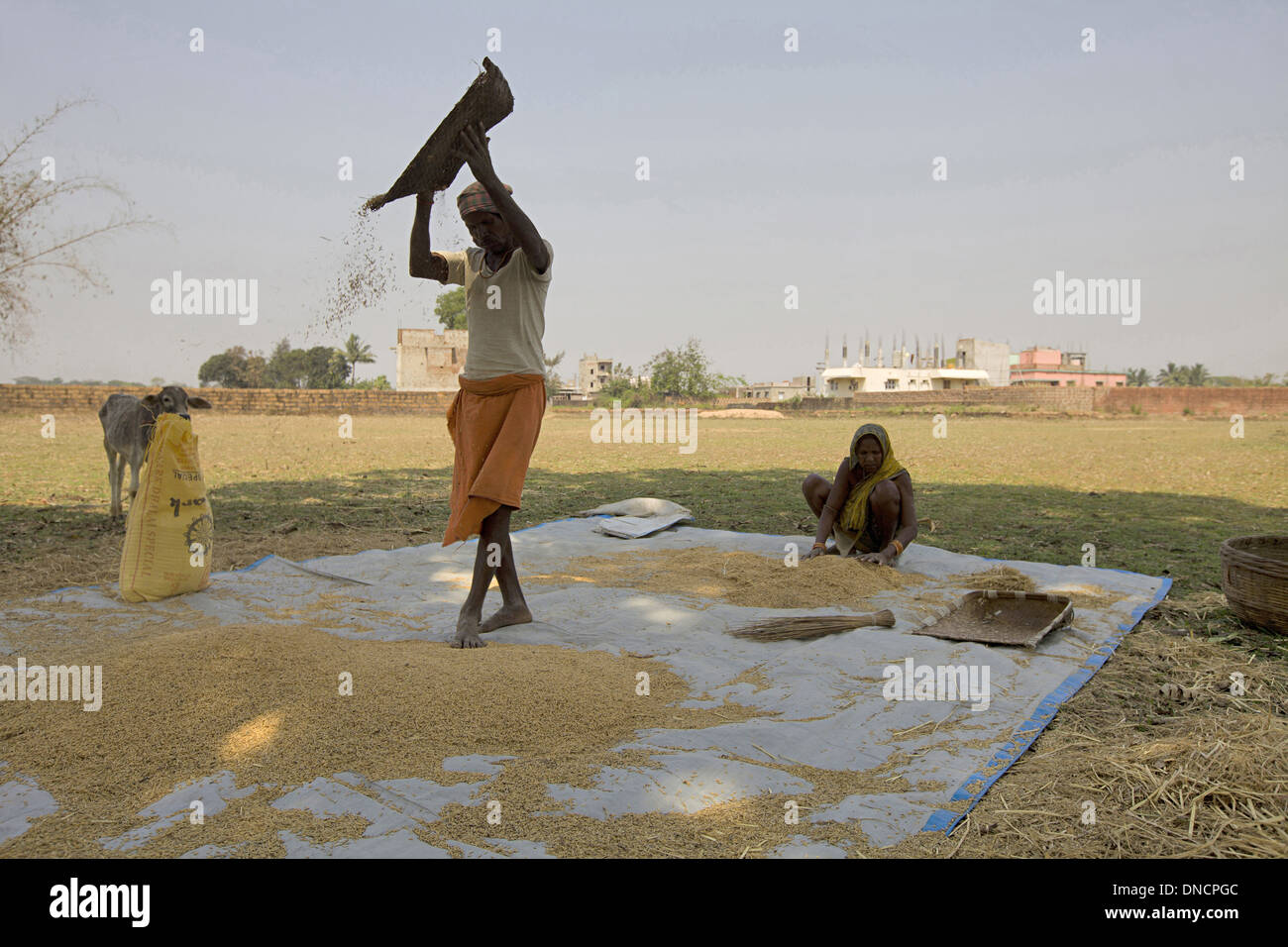 Orian man winnowing grains, Bhuvaneshwar, Orissa, India Stock Photo