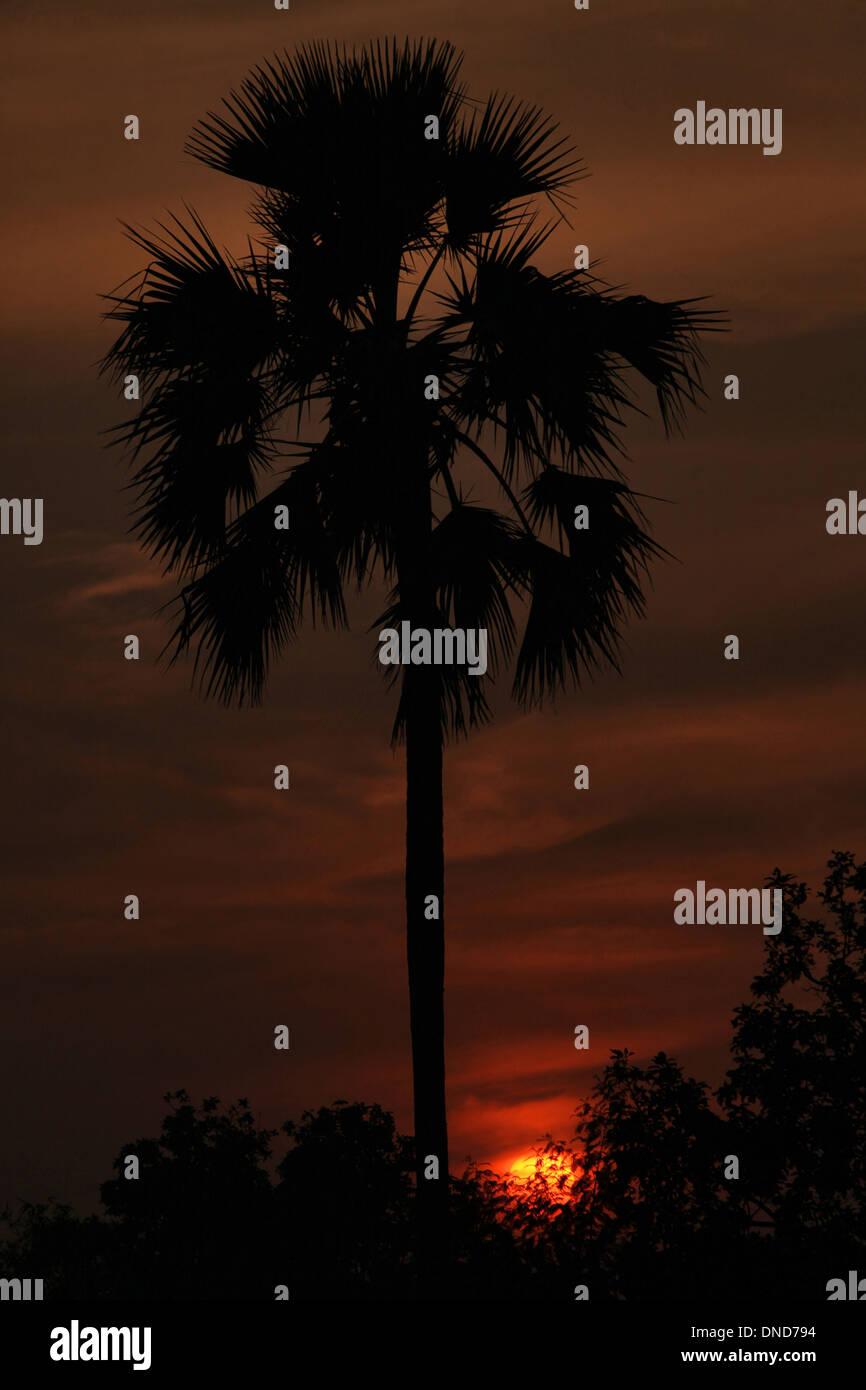 Setting sun with tree silhouette in Zabua district of Madhya Pradesh - Stock Image