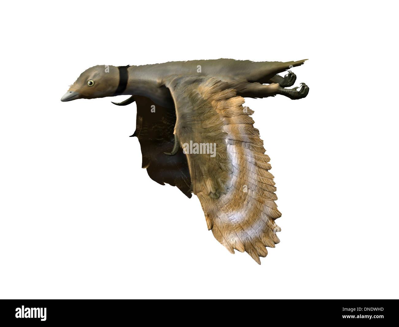 Iberomesornis romerali, Early Cretaceous of Spain. - Stock Image