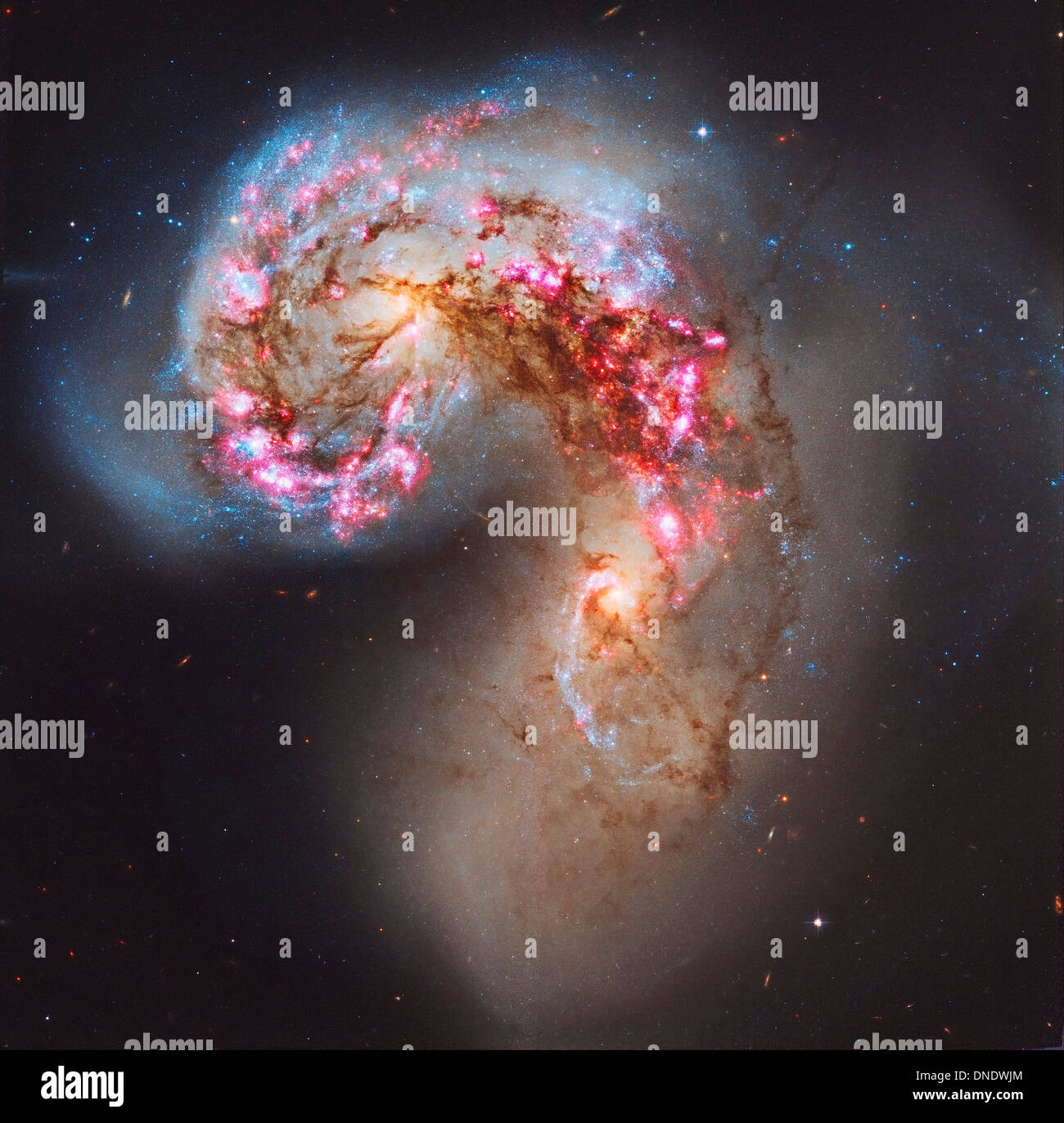 The Antennae galaxies, also known as NGC 4038/NGC 4039, are a pair of interacting galaxies in the constellation Corvus. - Stock Image