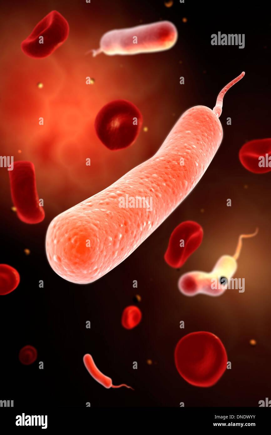 Conceptual image of vibrio cholerae causing cholera. - Stock Image