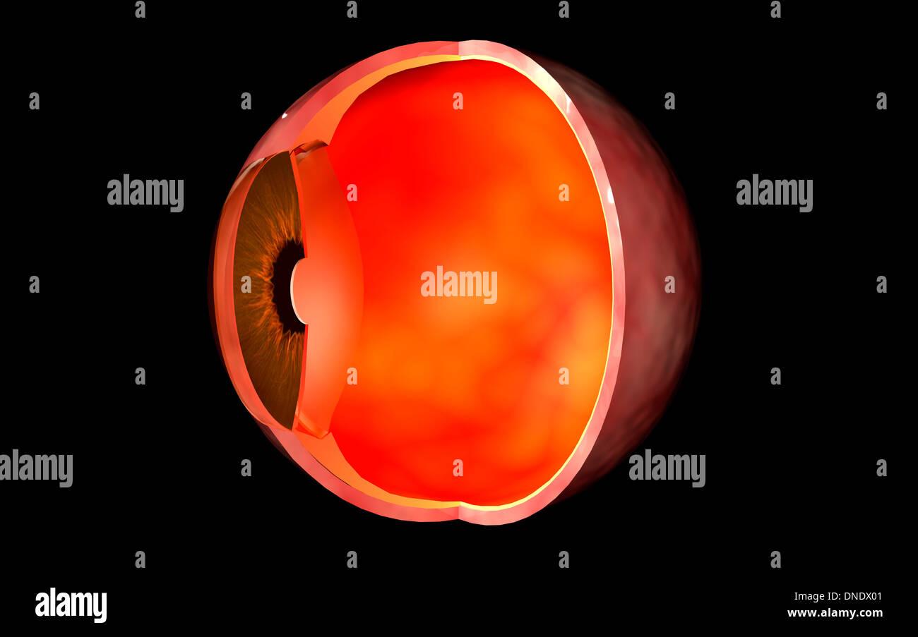Conceptual image of human eye cross section. - Stock Image