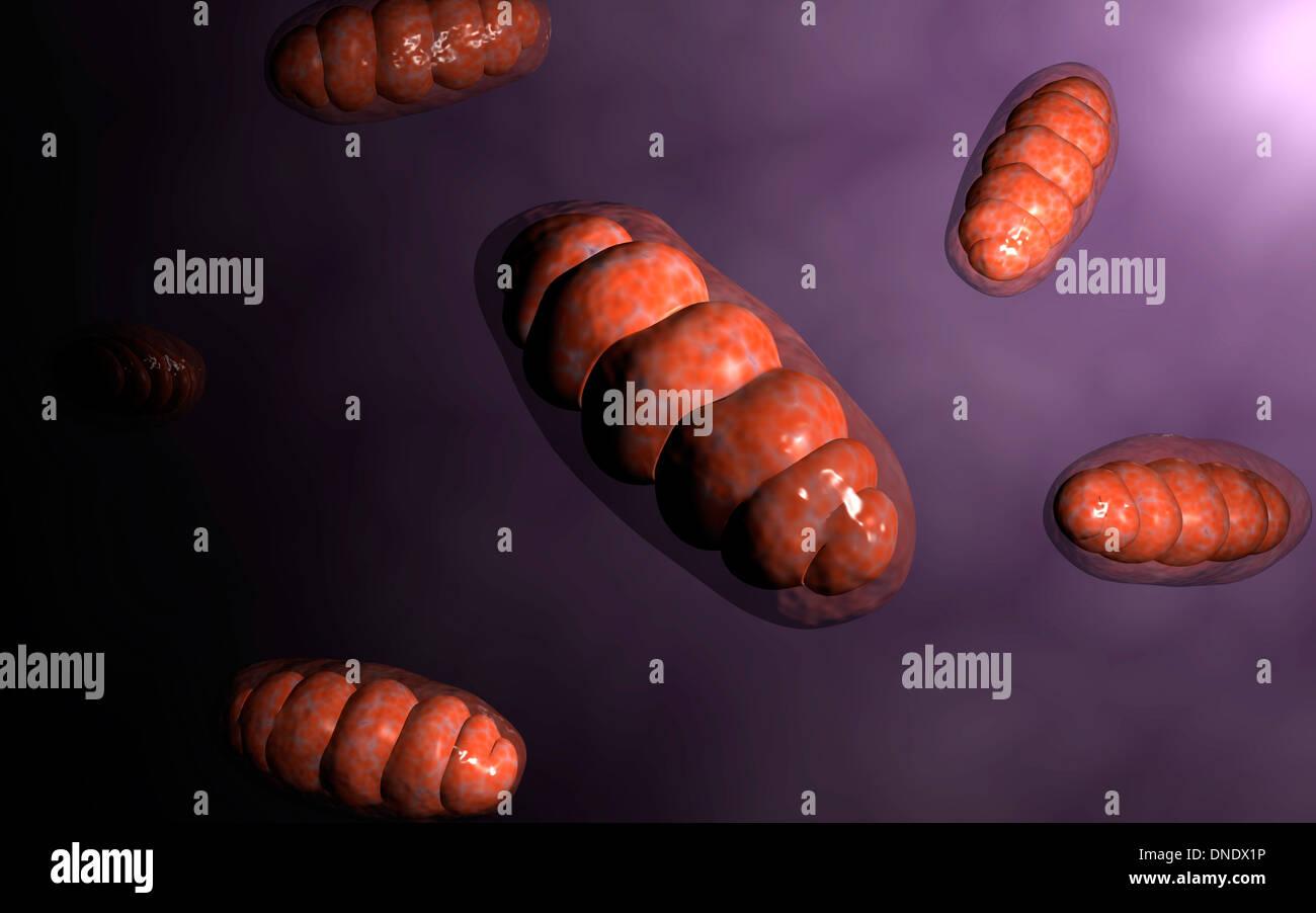 Conceptual image of mitochondria. Stock Photo