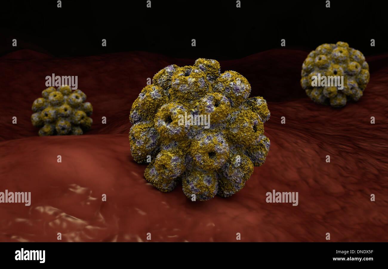 Conceptual image of polyomavirus. - Stock Image