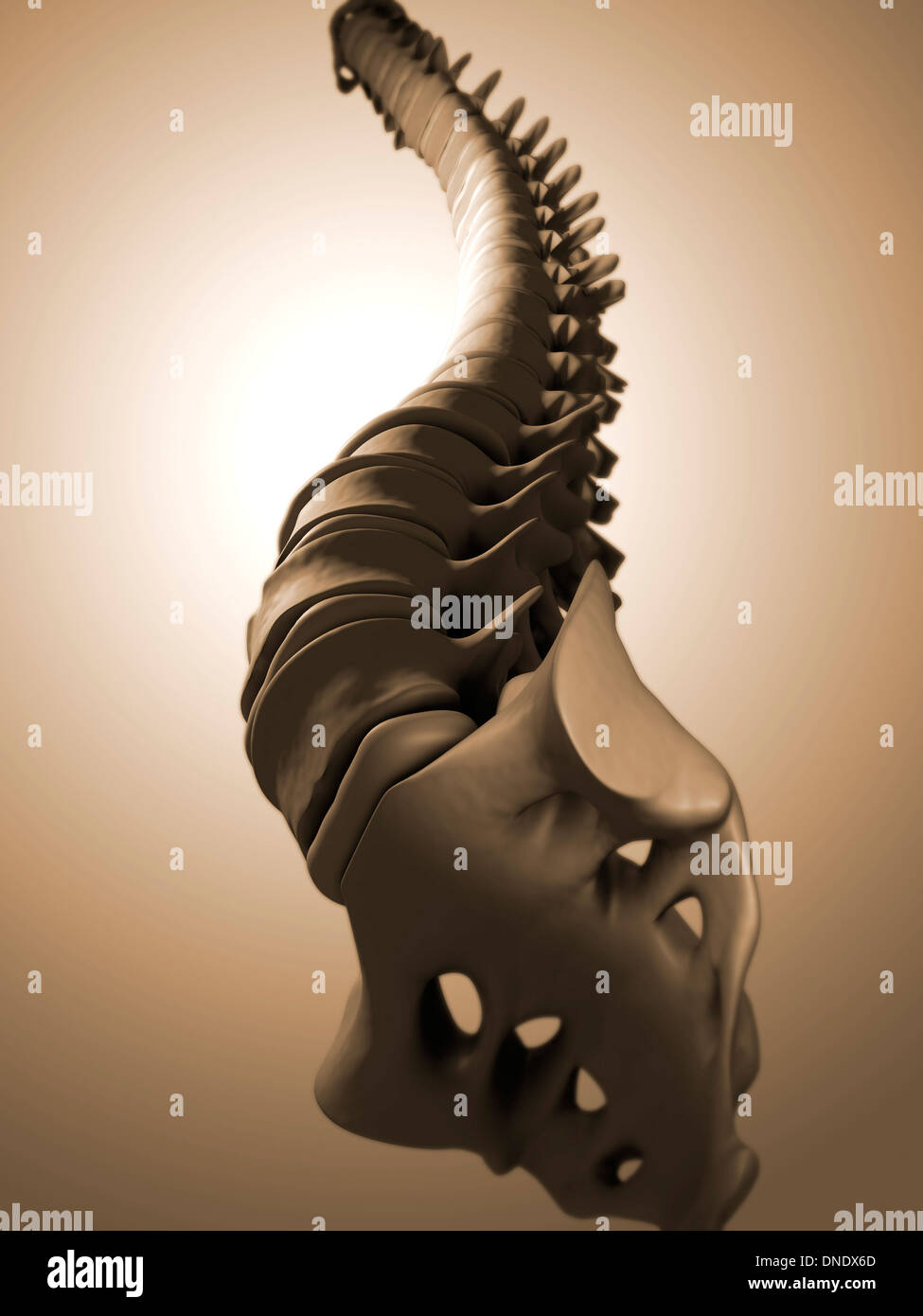 Conceptual image of human backbone. - Stock Image