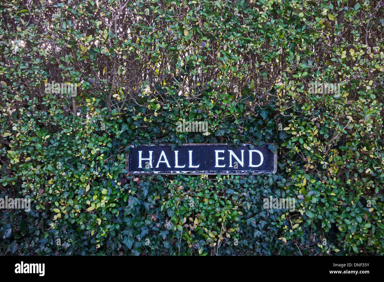 Road name sign in hedge Milton - Stock Image