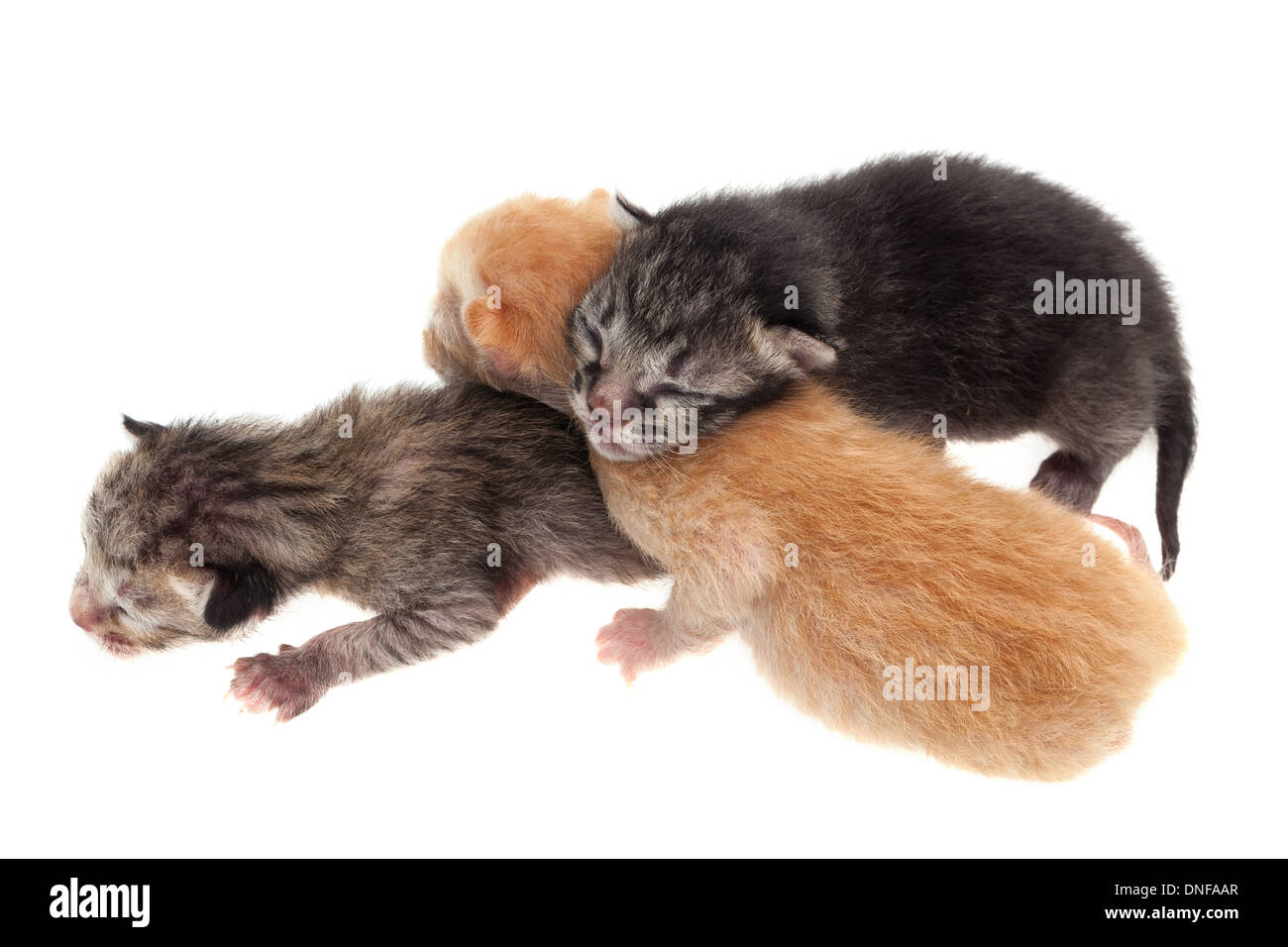 Isolated baby cats stock photos isolated baby cats stock images baby cats isolated on white background stock image thecheapjerseys Gallery