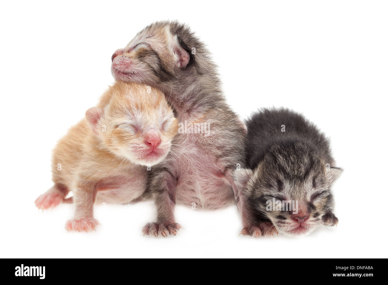 Cute new born kittens on white background - Stock Image