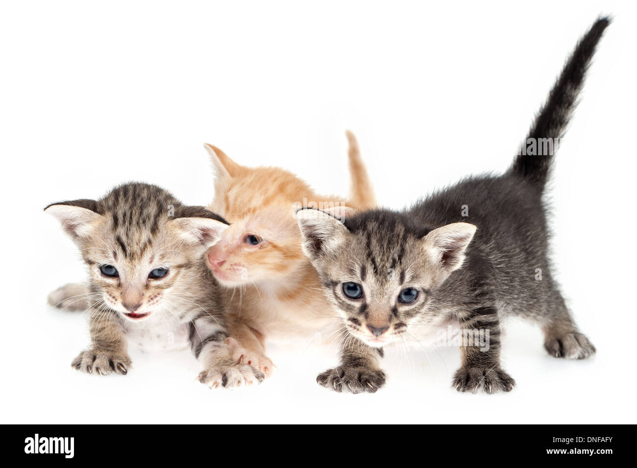 Cute kittens together on white background - Stock Image