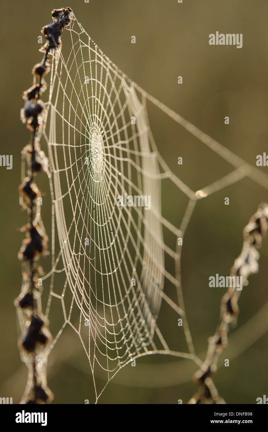 spider web lit with light of rising sun on early morning - Stock Image