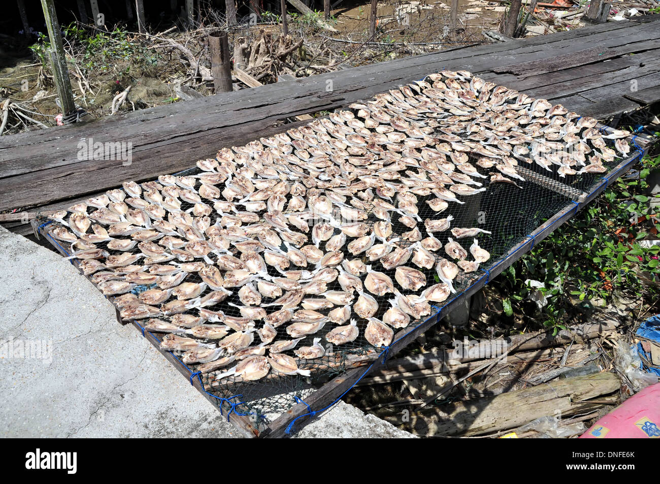 Salted Fish Drying Under The Sun - Stock Image