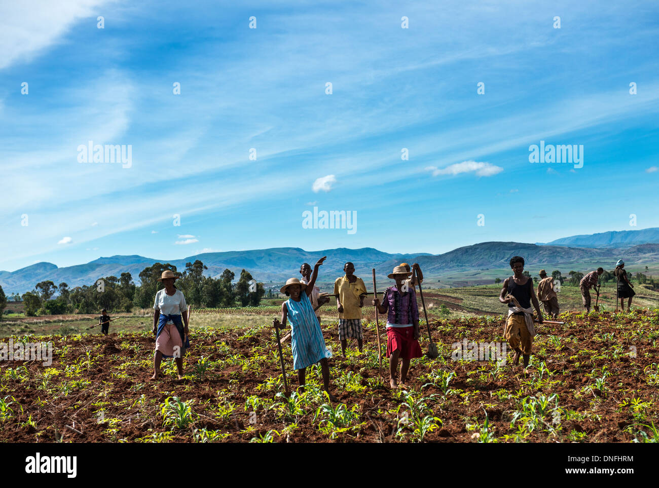 Malagasy farmers working in the fields. - Stock Image