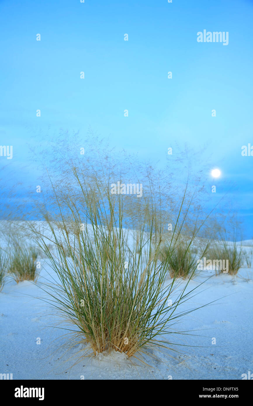 Moon over grasses and sand dunes, White Sands National Monument, Alamogordo, New Mexico USA - Stock Image