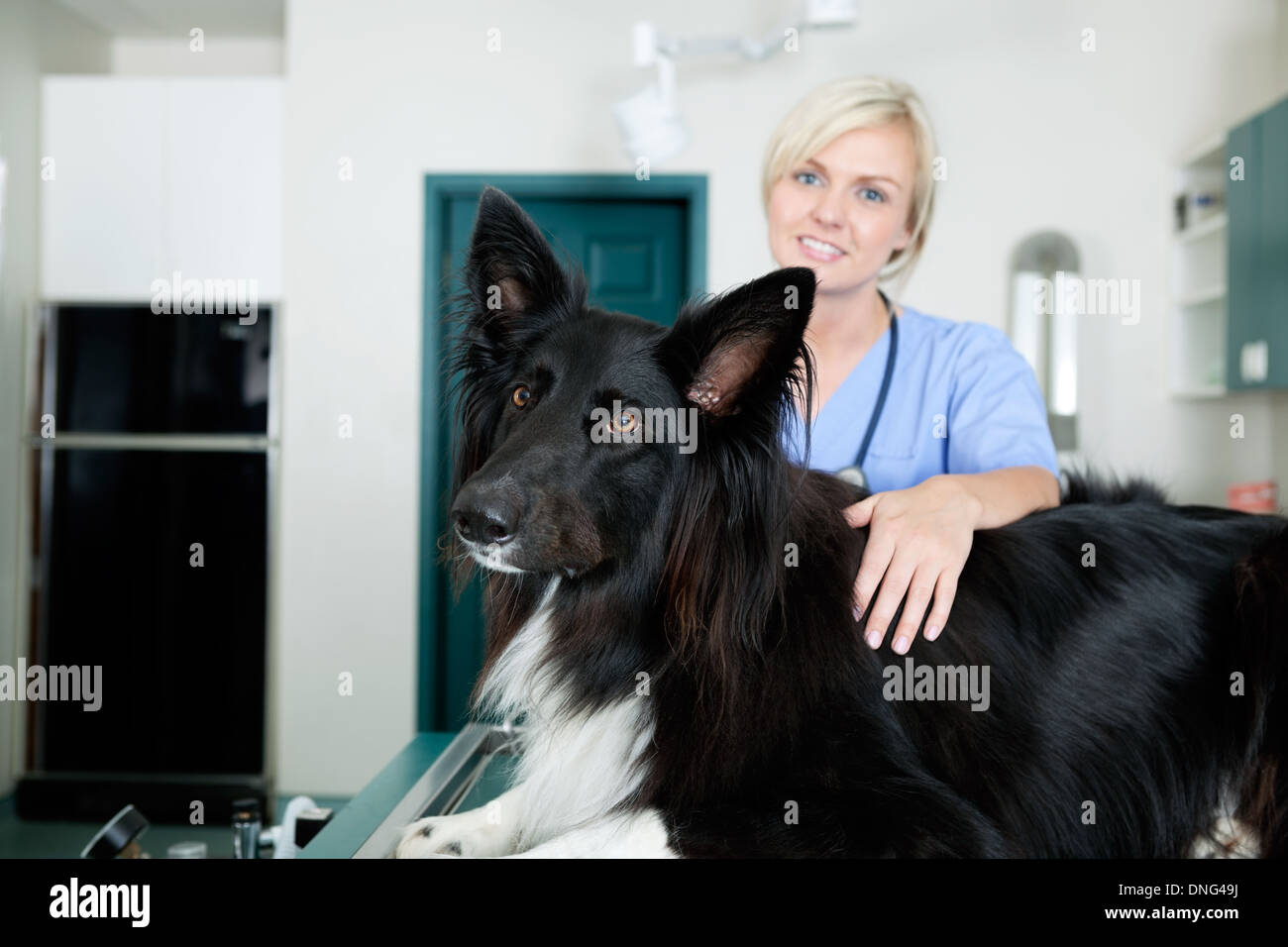 Female Veterinarian Doctor With A Dog At Clinic - Stock Image