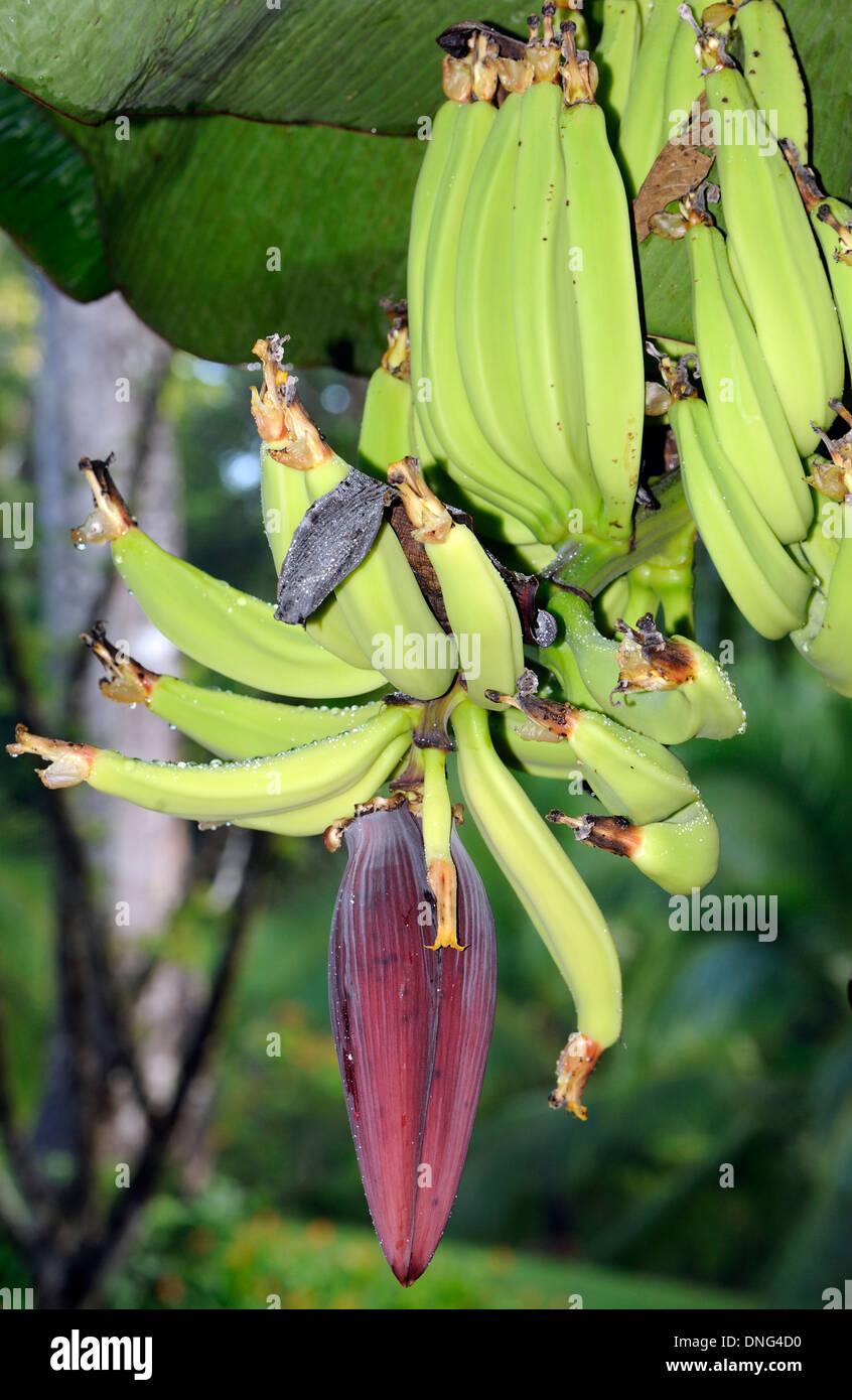 how to make banana flower
